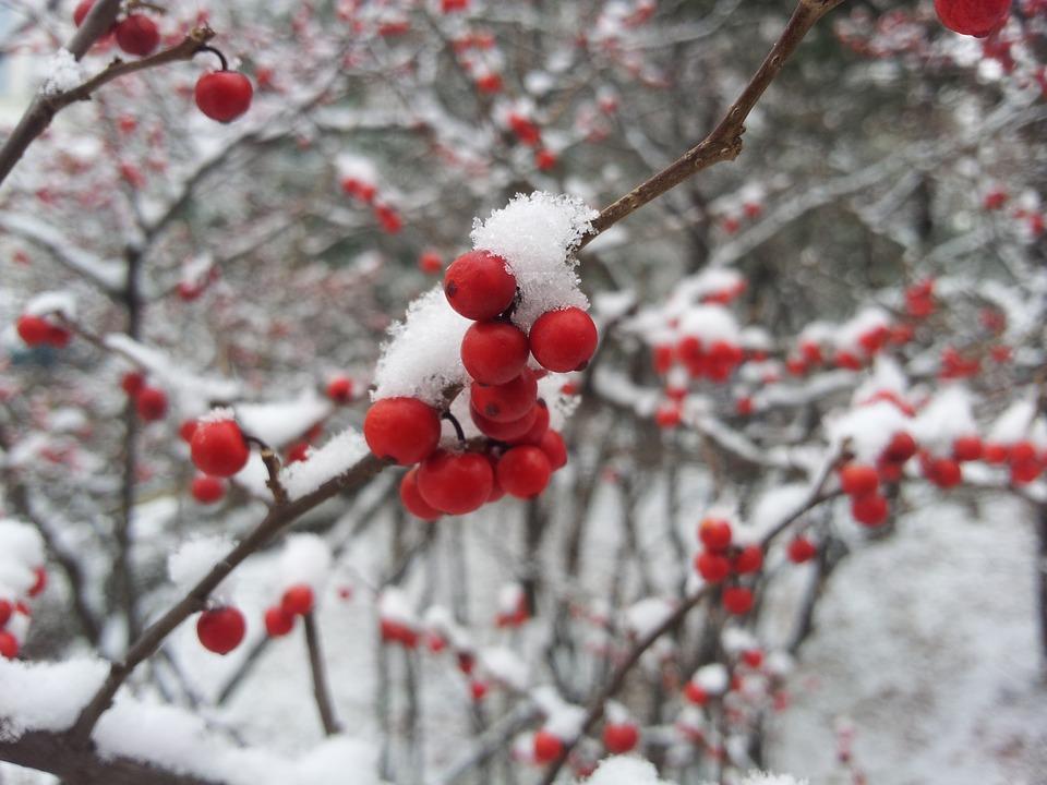 winter-643997_960_720_1